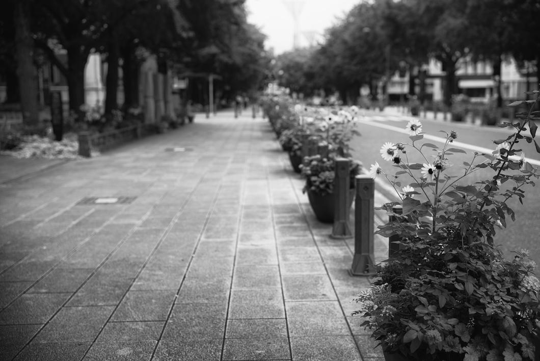 横浜風景2427