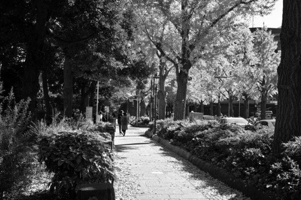 横浜風景2478